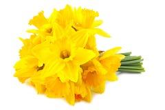Geleende lelie (gele narcis) 1 Royalty-vrije Stock Afbeeldingen