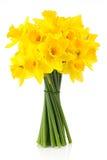 Geleende lelie (gele narcis) 2 Royalty-vrije Stock Foto