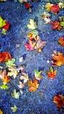 Gelegentliche Blätter auf Bürgersteig Stockfotos