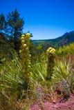 Gelegentliches Blumen habitate in Colorado-Bergen Lizenzfreie Stockfotografie