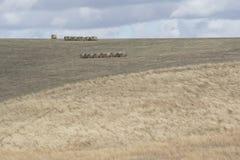 Gelegentliches ländliches Feld und Hay Bales, Fleurieu-Halbinsel Lizenzfreies Stockfoto