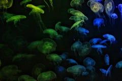 Geleias do mar imagens de stock