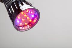 Geleide lamp voor installatie het groeien Stock Foto's