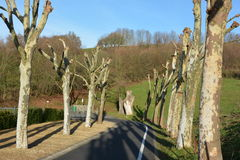Geleide vlak-bomen in de winter Stock Afbeelding