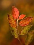 Geleidelijk aan veranderende bladeren Royalty-vrije Stock Afbeeldingen