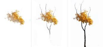 Geleidelijk esdoornpatroon met gele bladeren vector illustratie