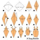 Geleidelijke instructies hoe te om tot origami een Mannetjeskever te maken Stock Foto's