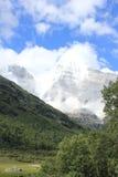 geleira alpina e floresta Foto de Stock
