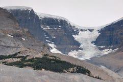 Geleira de Athabaska na via pública larga e urbanizada de Icefield em tudo é splendeur, Alb Imagens de Stock Royalty Free