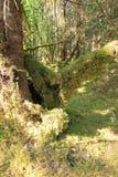 Geleira & lago de Mendenhall imagem de stock royalty free