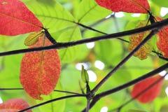 Gelesene und grüne Blätter gesehen von unten lizenzfreies stockbild