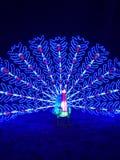 Geleuchteter Pfau Lizenzfreie Stockfotografie