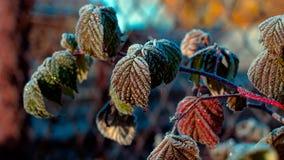 Geli di autunno di mattina Fotografia Stock