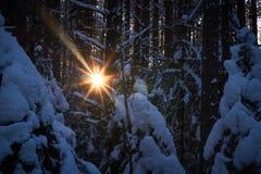 Gelijk makend in het donkere bos, Kerstmis Zonstralen in dark Nieuw die jaar, in sneeuw wordt behandeld De nette die bomen van de Royalty-vrije Stock Foto