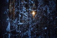 Gelijk makend in het donkere bos, Kerstmis Zonstralen in dark Nieuw die jaar, in sneeuw wordt behandeld De nette die bomen van de Royalty-vrije Stock Afbeeldingen