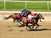 Gellatians winning at Belmont. In a thrilling finish at beautiful Belmont Park. Fleethoto stock photography