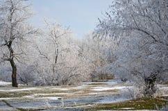 Gelo. Fotografia Stock Libera da Diritti