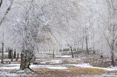 Gelo. Fotografie Stock Libere da Diritti