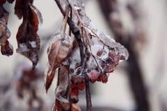 Gelo Fotos de Stock