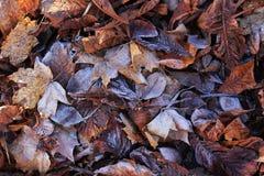 Gelo al suolo su fogliame autunnale Fotografia Stock