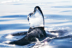 Gelo azul sincelo transparente aerodinâmico Foto macro do gelo Imagens de Stock