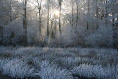 Gelo bianco con luce solare fra gli alberi Limburgo Immagini Stock