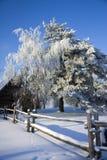 Gelo bianco sugli alberi Immagini Stock Libere da Diritti