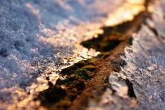Gelo da manhã Fotos de Stock