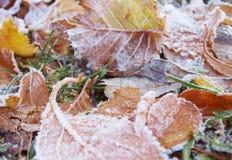Gelo das folhas de outono Foto de Stock Royalty Free