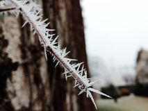 Gelo del ghiaccio sul ramo Fotografie Stock