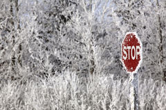 Gelo del Hoar immagini stock libere da diritti