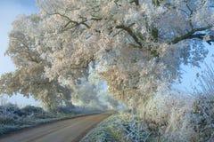 Gelo del Hoar, Inghilterra. immagini stock