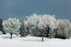 Gelo del Hoar sugli alberi Fotografie Stock Libere da Diritti