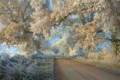 Gelo del Hoar sugli alberi immagine stock