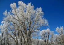 Gelo del Hoar sugli alberi fotografia stock libera da diritti