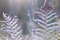 Gelo del Hoar sulle piante immagini stock