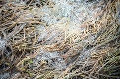 Gelo della primavera sull'erba Immagine Stock