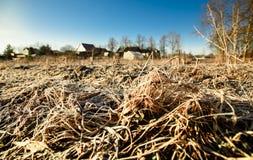 Gelo della primavera sull'erba Immagine Stock Libera da Diritti