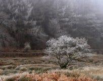 Gelo di Hoare sugli alberi Fotografie Stock