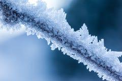 Gelo do galho Foto de Stock Royalty Free