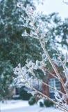 Gelo e ghiaccio sui rami. Fotografie Stock Libere da Diritti