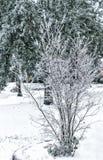 Gelo e ghiaccio sui rami.  Fiorisca l'albero coperto in ghiaccio dopo una tempesta di ghiaccio di mattina. Fotografia Stock