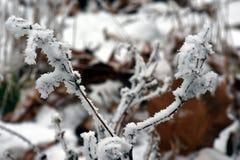 Gelo e neve Fotografie Stock Libere da Diritti