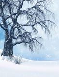 Gelo ed albero innevato nell'inverno freddo Fotografia Stock Libera da Diritti