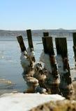Gelo em pilhas velhas do rio Fotografia de Stock Royalty Free