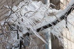 Gelo em uma árvore no inverno Fotos de Stock Royalty Free