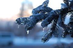 Gelo invernale fotografie stock libere da diritti