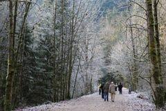 Gelo invernale Fotografia Stock Libera da Diritti