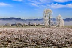 Gelo invernale sui campi dell'azienda agricola in Fraser Valley Canada Fotografie Stock Libere da Diritti