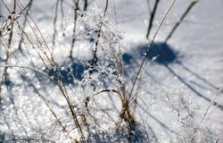 Gelo liso na grama Foto de Stock Royalty Free